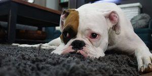 Cómo limpiar alfombras y moquetas de forma eficaz